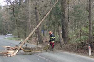 30.3.2016 Intervencija – Obviselo drevo na Brniški cesti